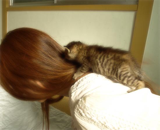 おっぱい探して…(生後2週間の子猫・家族募集)_a0389088_17303576.jpg