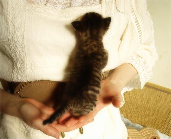 3猫十色(生後2週間の子猫)_a0389088_17303727.jpg
