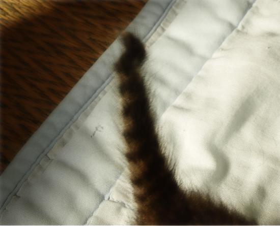3猫十色(生後2週間の子猫)_a0389088_17303792.jpg
