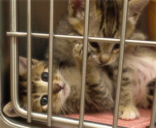 しあわせになるために(捨てられた生後2週間の子猫)_a0389088_17304909.jpg