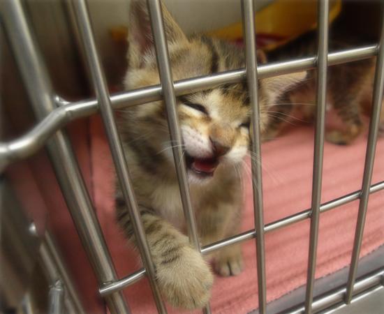 しあわせになるために(捨てられた生後2週間の子猫)_a0389088_17304925.jpg