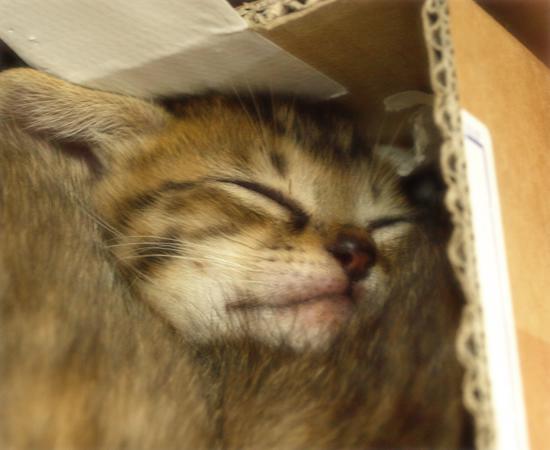 しあわせになるために(捨てられた生後2週間の子猫)_a0389088_17305082.jpg
