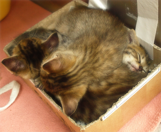 しあわせになるために(捨てられた生後2週間の子猫)_a0389088_17305084.jpg
