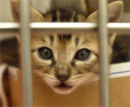 しあわせになるために(捨てられた生後2週間の子猫)_a0389088_17305098.jpg