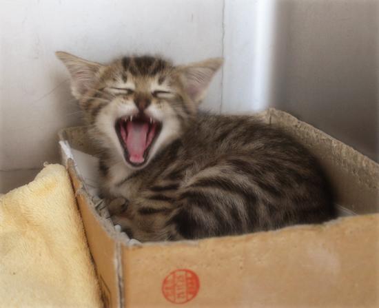 ひとりぼっちでも(生後2週間で捨てられていた乳飲み子猫)_a0389088_17310309.jpg