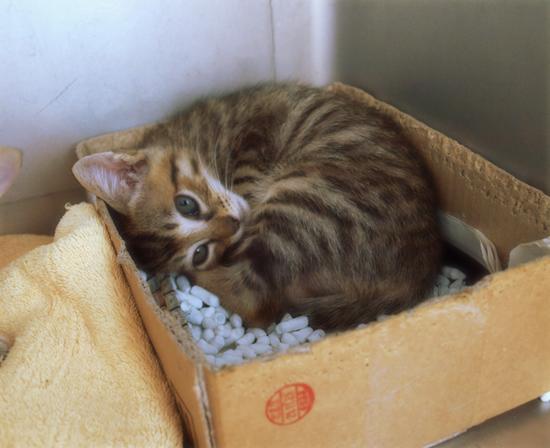 ひとりぼっちでも(生後2週間で捨てられていた乳飲み子猫)_a0389088_17310337.jpg