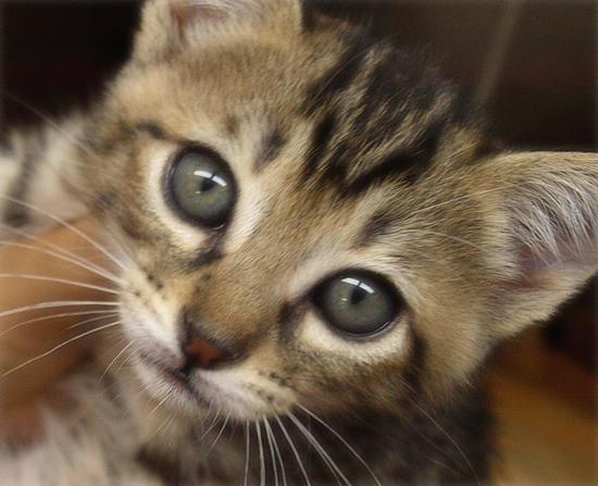 ひとりぼっちでも(生後2週間で捨てられていた乳飲み子猫)_a0389088_17310408.jpg
