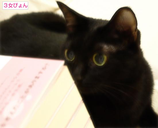 新作書籍、先行販売♪_a0389088_17322741.jpg