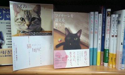 オシャレな猫(猫虐待の署名募集)_a0389088_17325289.jpg