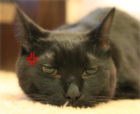 猫のオヤジ狩り_a0389088_17350203.jpg