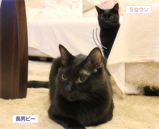 猫のオヤジ狩り_a0389088_17350277.jpg