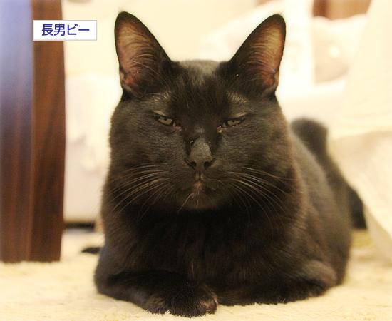 猫のオヤジ狩り_a0389088_17350293.jpg