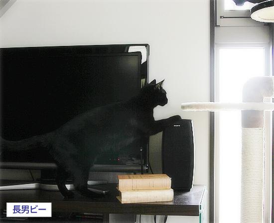 猫のオヤジ狩り_a0389088_17350322.jpg