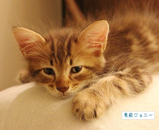 おやすみの大切さ_a0389088_17370666.jpg