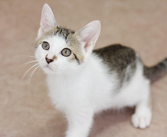 残された4匹子猫・家族募集中!_a0389088_17371475.jpg