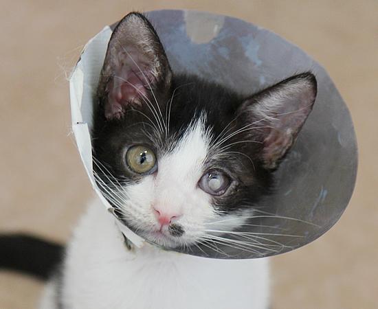残された4匹子猫・家族募集中!_a0389088_17371476.jpg