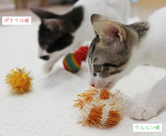 ふたごの子猫_a0389088_17371537.jpg