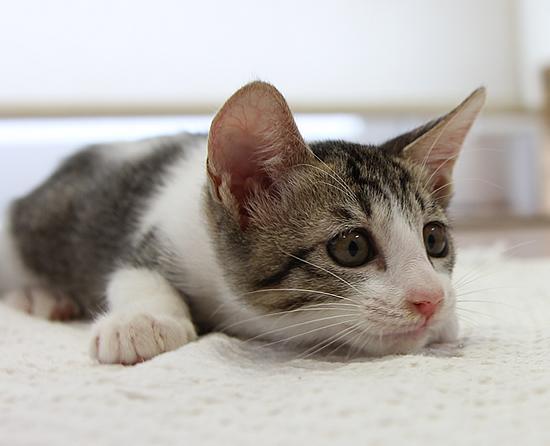 ふたごの子猫_a0389088_17371644.jpg