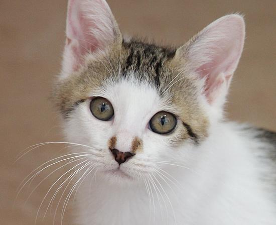 ハンサム子猫「はなわくん」_a0389088_17371861.jpg