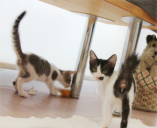 子猫の萌えポイント_a0389088_17372048.jpg