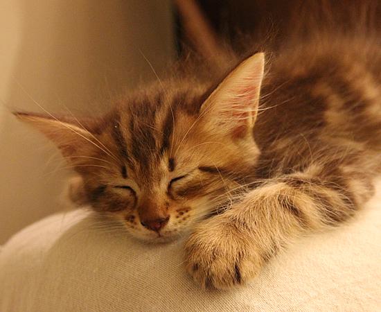 子猫14匹・全員家族決定!!_a0389088_17373114.jpg