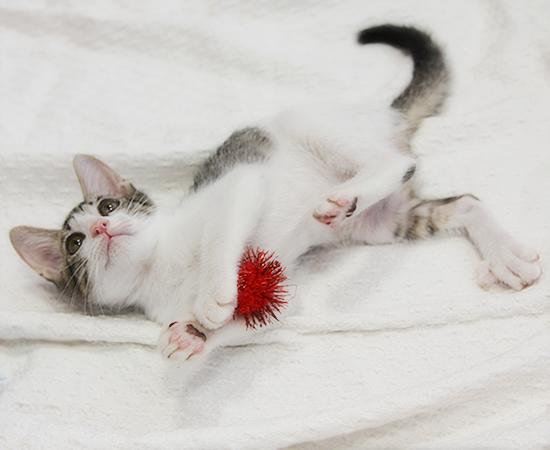 子猫14匹・全員家族決定!!_a0389088_17373148.jpg