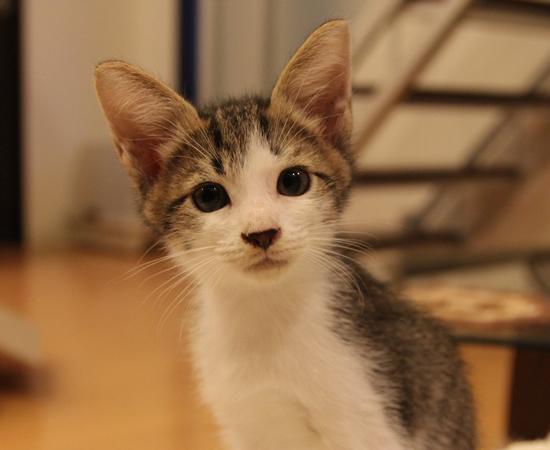 子猫14匹・全員家族決定!!_a0389088_17373158.jpg