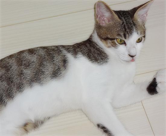 多頭飼い崩壊子猫たちの、うれしいおしらせ_a0389088_17374891.jpg