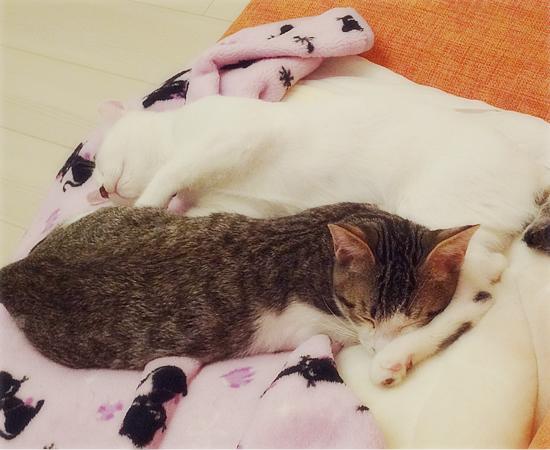 多頭飼い崩壊子猫たちの、うれしいおしらせ_a0389088_17374929.jpg