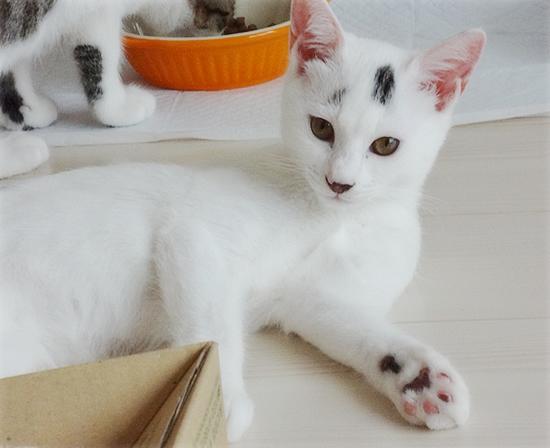 多頭飼い崩壊子猫たちの、うれしいおしらせ_a0389088_17374985.jpg