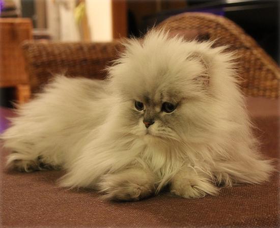 オシャレな猫(猫虐待の署名募集)_a0389088_17385011.jpg