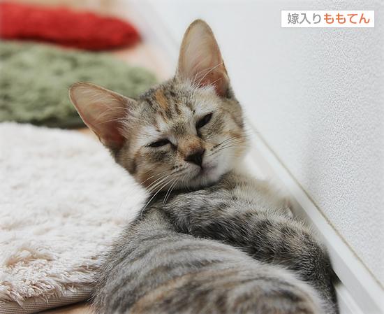 子猫と人と(NHK福祉ポータル「ハートネット」更新)_a0389088_17422610.jpg