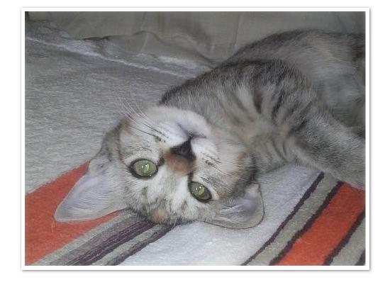 子猫と人と(NHK福祉ポータル「ハートネット」更新)_a0389088_17422732.jpg