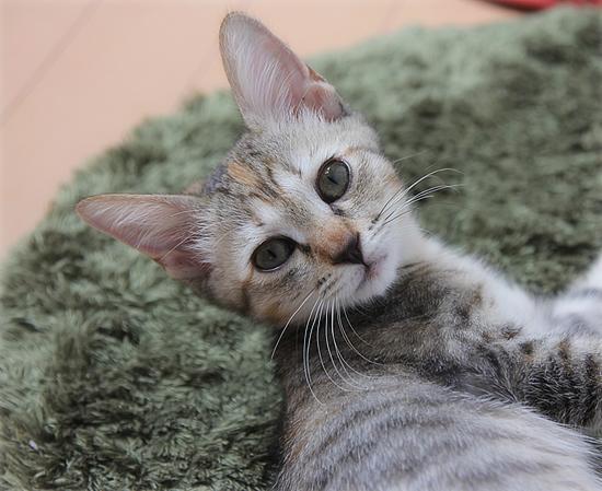 子猫と人と(NHK福祉ポータル「ハートネット」更新)_a0389088_17422788.jpg