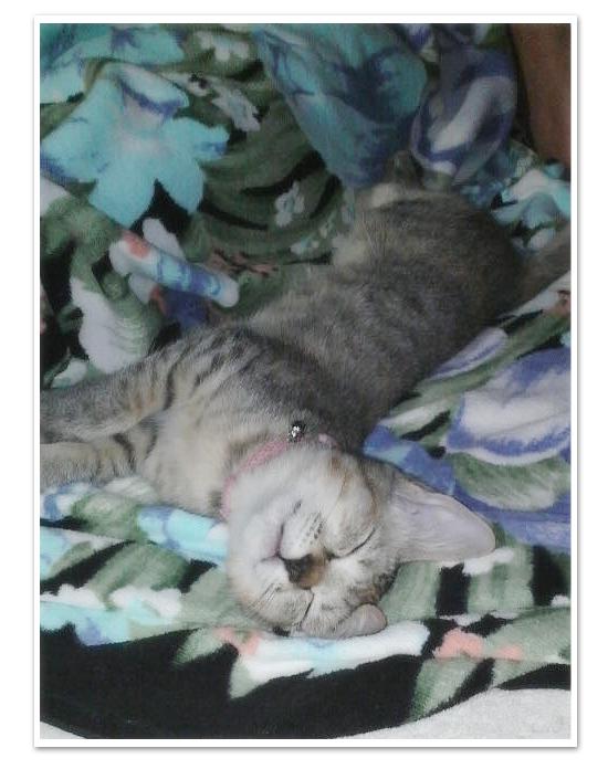 子猫と人と(NHK福祉ポータル「ハートネット」更新)_a0389088_17422878.jpg