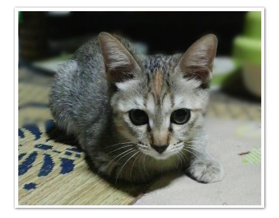 子猫ももてん特集_a0389088_17425565.jpg