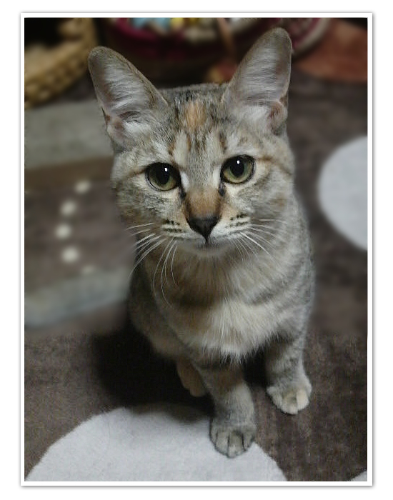 子猫ももてん特集_a0389088_17425569.jpg