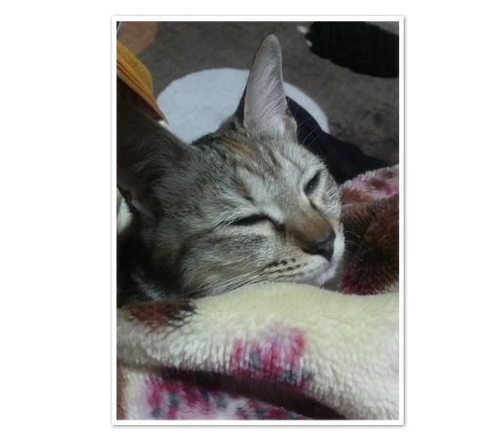 子猫ももてんちゃんの今_a0389088_17431510.jpg