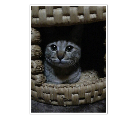 子猫ももてんちゃんの今_a0389088_17431527.jpg