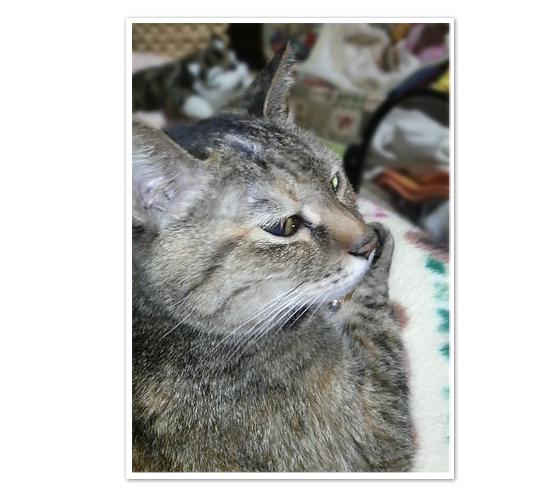 子猫ももてんちゃんの今_a0389088_17431571.jpg