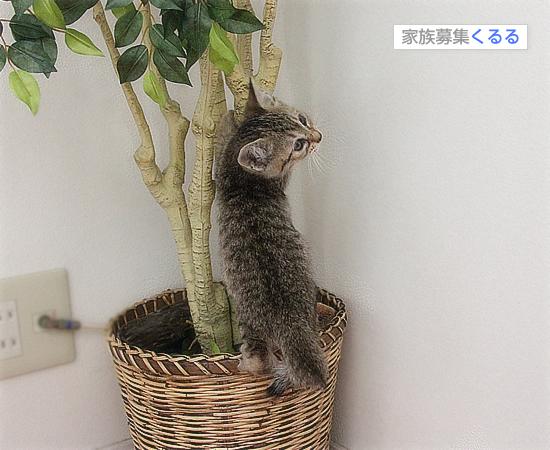 笑い顔猫「くるる」の大冒険_a0389088_17460806.jpg