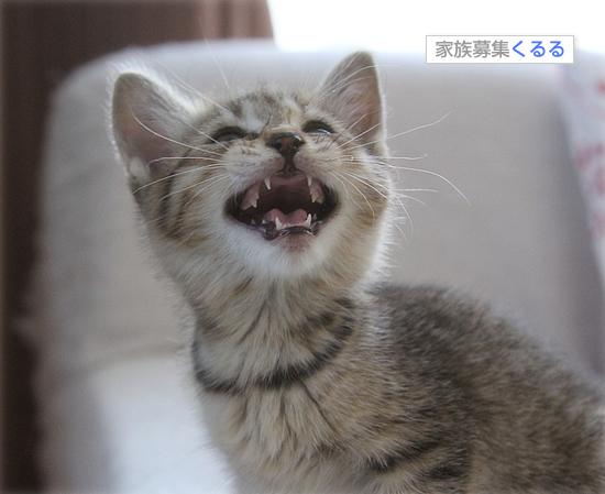 子猫の歯_a0389088_17461083.jpg