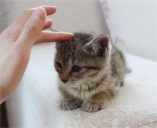 子猫の「ハイポーズ」♪_a0389088_17461317.jpg