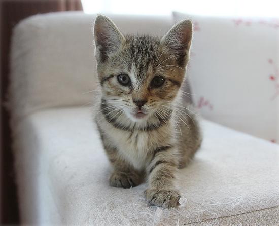 子猫の「ハイポーズ」♪_a0389088_17461383.jpg