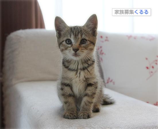 子猫の「ハイポーズ」♪_a0389088_17461399.jpg