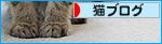 子猫の「ハイポーズ」♪_a0389088_17461401.jpg