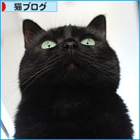 腎不全のジュニアのこと(vol1)_a0389088_17484027.jpg