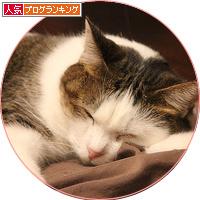 猫が抗えないもの_a0389088_18142020.jpg