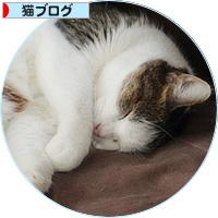 猫が抗えないもの_a0389088_18142036.jpg