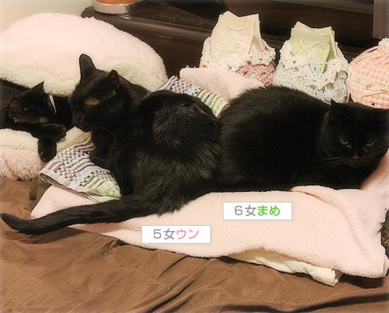 猫が抗えないもの_a0389088_18142075.jpg